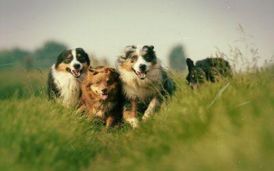 Tips til å ta gode bilder av hunden din