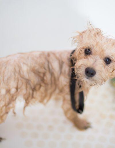 adorable-animal-bath-1436139
