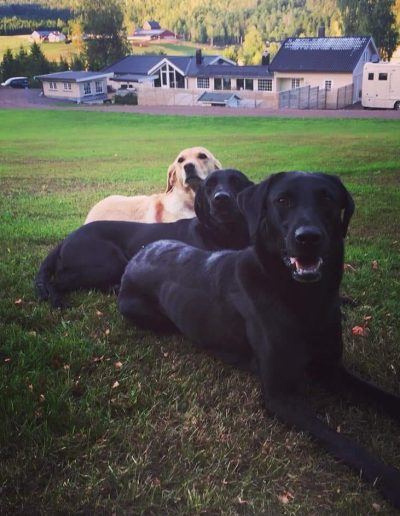 Maja (bakerst), Bongo, Brandon